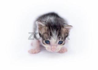 Cute little kitten isolated on white.