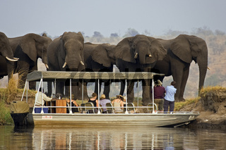 Touristen in einem Boot beobachten eine Gruppe Afrikanischer Elefanten (Loxodonta africana), Chobe River, Botswana, Afrika, tourists watching an African Elephant, Africa