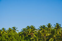 palm tree background and blue sky - palm trees and clear sky background