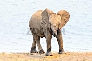 der kleine Elefant.jpg