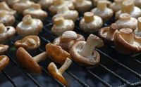White and shiitake mushrooms on grill