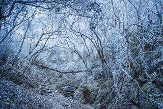 Frozen forest in Huangshan National park.