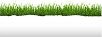 GreenGrassAndRippedPaperBorderWhiteBackground-10-M-a97-180225.eps