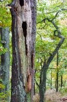 Wald Kreislauf des Lebens