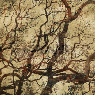grunge background with tree silhouettes