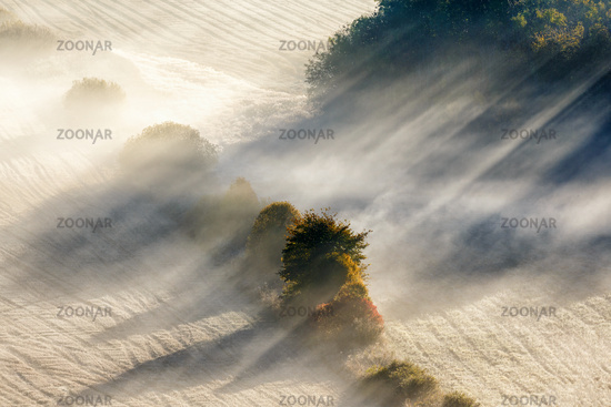 Sun rays in fog on a field