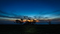 Blue Hour Sunset with Trees
