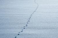 Footprints on shining snow.