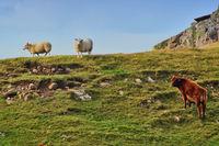 Zwei Schafe und eine Kuh auf einem grasbewachsenen Hügel