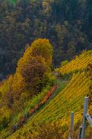 Weingarten im Villnoesstal