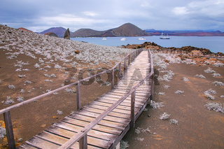 Wooden boardwalk on Bartolome island, Galapagos National Park, Ecuador.