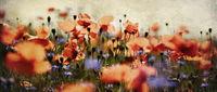 mohn- und kornblumen panorama nostalgisch
