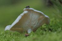 Pilz mit Insekt