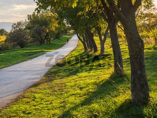 Radfahrer auf einem Radweg fährt eine Allee entlang im Herbst