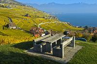 Lavaux Weinberge im goldgelben Herbstlaub am Genfersee