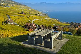 Lavaux Weinberge im goldgelben Herbstlaub am Genfersee, Lavaux, Waadt, Schweiz