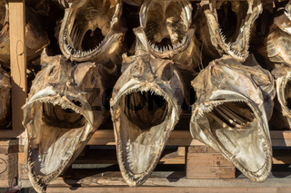 Dried cod fish heads with big open mouths