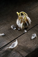 old sprouting garlic on wooden table