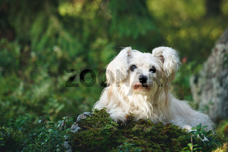 White mixed breed dog in forest