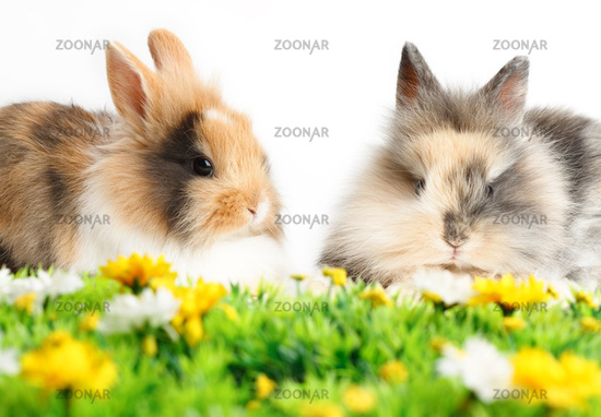 Two young rabbits with grass isolated on white background