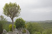 Landschaft in Istrien