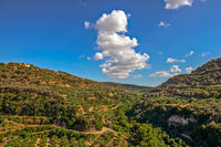 Olive groves on hills in Crete, Greece