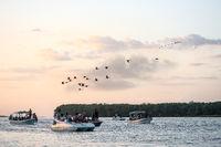 Bird watching scarlet ibis trip on the delta of Parnaiba river, Brazil
