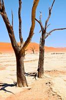 Deadvlei und die toten Bäume Namibia