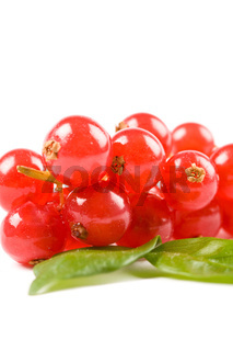 Currants on white background
