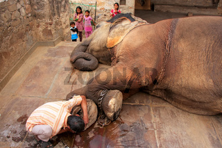 Local caretaker cleaning elephant's foot at small elephant quarters in Jaipur, Rajasthan, India