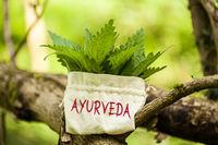 """Brennnesseln mit Wort """"Ayurveda"""""""
