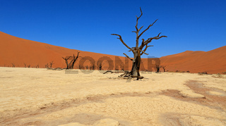 Dead Vlei im Namib Naukluft Nationalpark in Namibia
