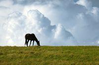 Black horse on the horizon