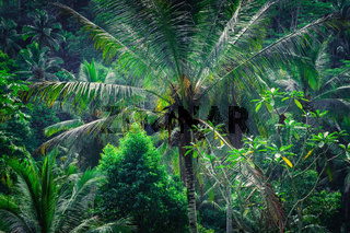 Rainforest tropical nature