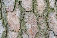 Abstract old wood tree bark texture background. Closeup of tree bark