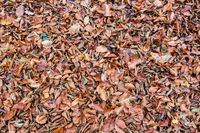 Dead leaves background