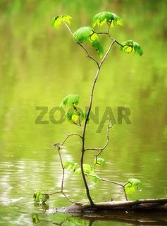 Kleiner Baum