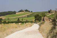 Feldweg in ländlicher Gegend und Felder in der Toskana, Italien