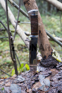 hunting knife on a fallen tree in the woods