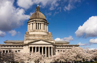 Washington State Capital Building Olympia Springtime Cherry Blossoms Capitol