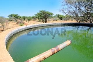 Wasserbecken im Weideland in Namibia