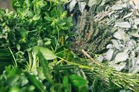 Mix of fresh herbs background