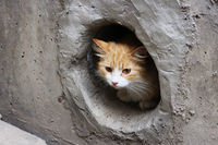 A white-red, stray cat sits in a circular cellar window