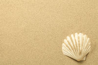 Summer, Sand Background with Shell