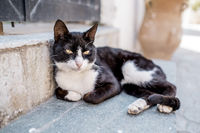 Portrait of Street Cats in Crete Greece