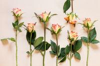 Rosen auf Papier