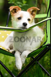 Hund auf Campingstuhl