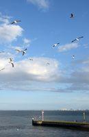 Am Hafen von Texel