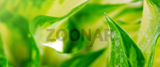 Abstract green leaf backgrounds.