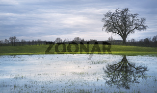 Big tree on a meadow and water reflection